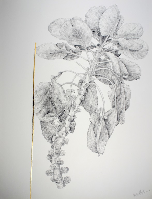 Brussel Sprout, graphite and gold leaf, 76x57cm
